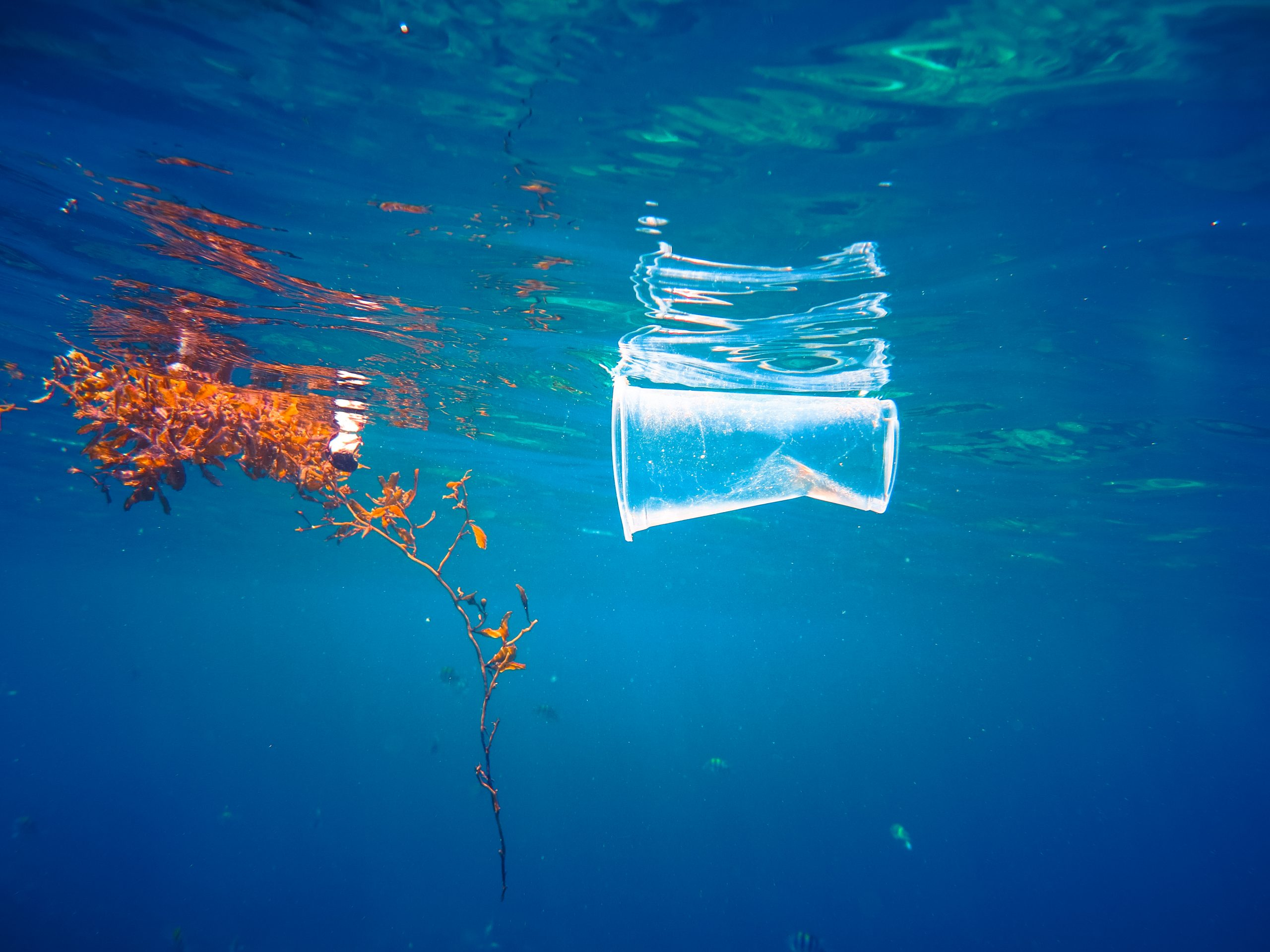 A discarded plastic drinking cup floats at the surface of the Sea.